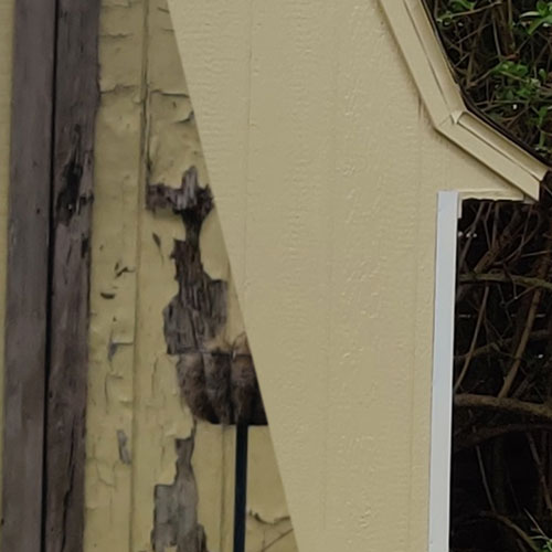Replace Shed Siding Panels